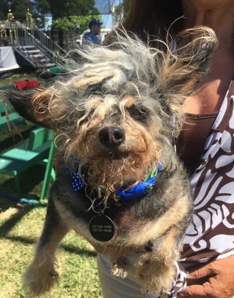 The Winner Of The 2017 World S Ugliest Dog Contest Is