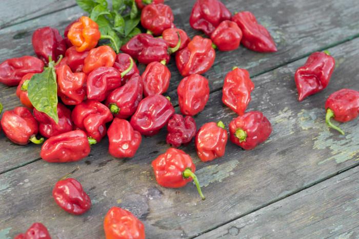 Tabasco unleashes new Scorpion flavor sauce