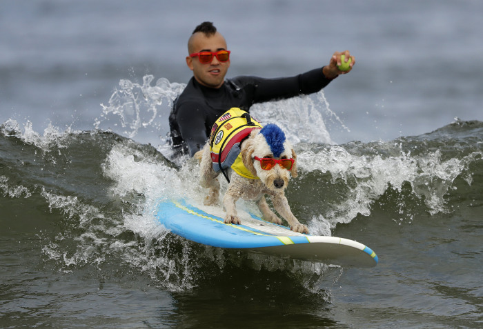 BBC anchor gives the least enthusiastic report about surfing dogs