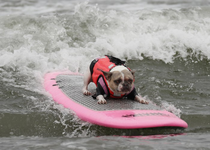 BBC presenter gives hilariously lacklustre report on surfing dogs
