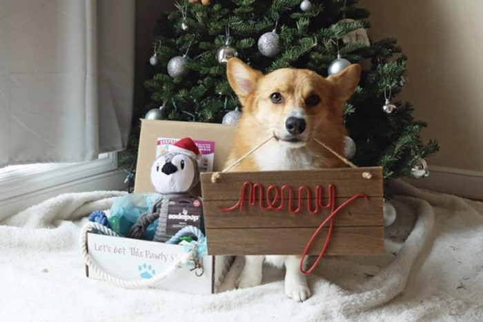 Best Holiday Gifts For Dogs And Dog Lovers Today Com
