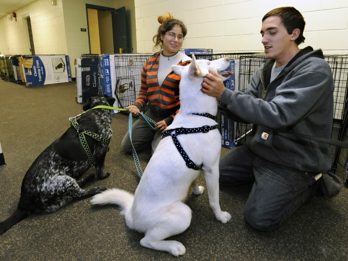 Sarah Korman and Michael Cunba, who evacuated their home in Long Beach, N.Y., were able to bring their dogs Jade, left, and Ava to a pet shelter run b...