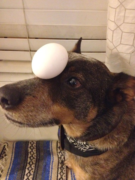 You can put an egg on Jack's head and not have to worry about it falling and cracking.