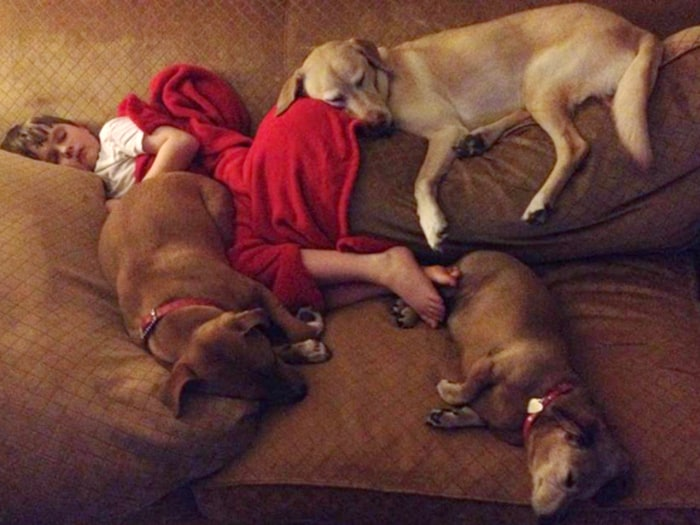 Image: Jonny Hickey takes a nap with his family's three dogs