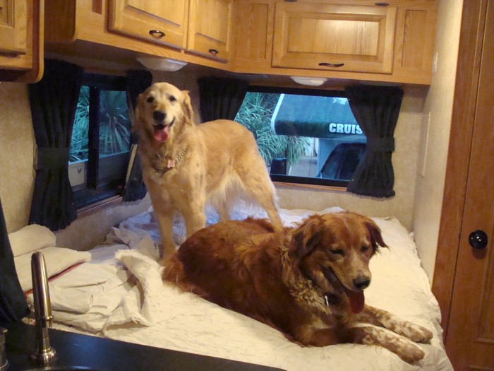 Image: Dogs in RV