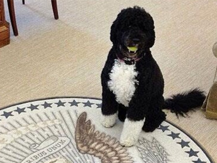 IMAGE: Bo Obama