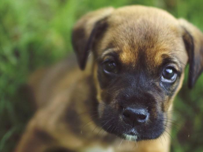 Image: Puppy