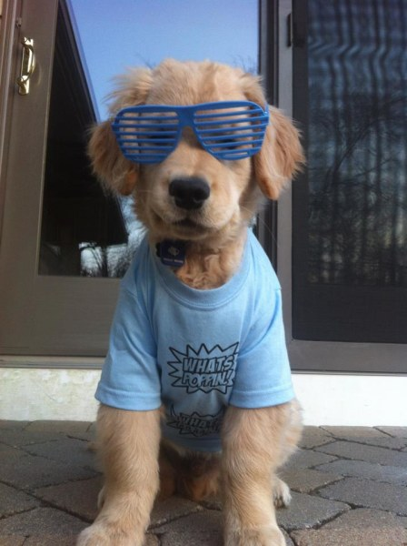 Ray Charles The Golden Retriever / Facebook