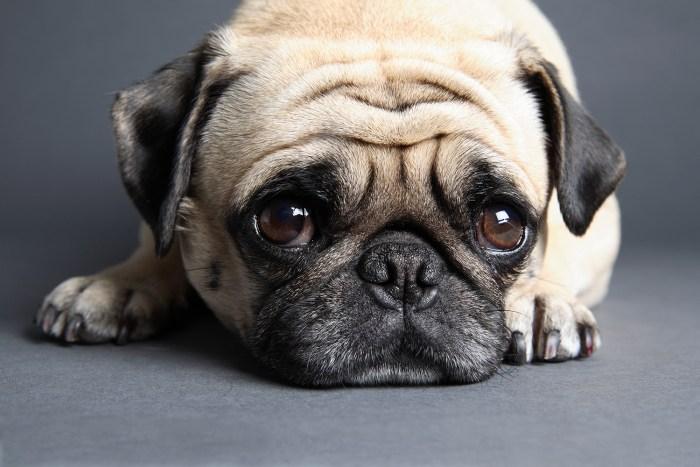 Image: Sad pup