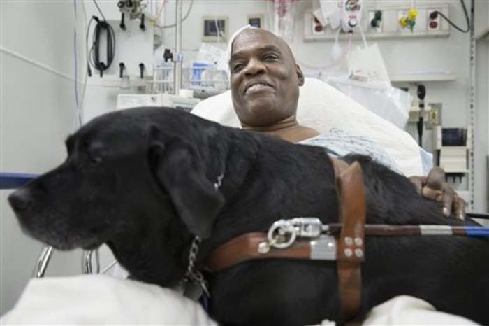 Cecil Williams smiles as he pets his guide dog Orlando in his hospital bed following a fall onto subway tracks from the platform at 145th Street, Tues...