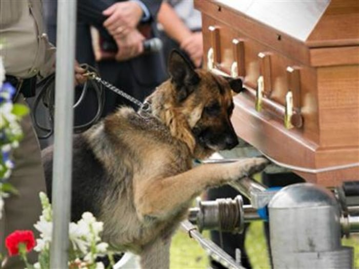Kentucky police officer Jason Ellis was killed in a suspected ambush over the weekend.  At his funeral, his K-9 partner, Figo, honored him, laying a paw on his coffin.
