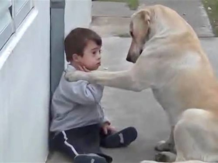 This video is warming hearts worldwide: A playful Labrador retriever wins over a toddler with Down syndrome.