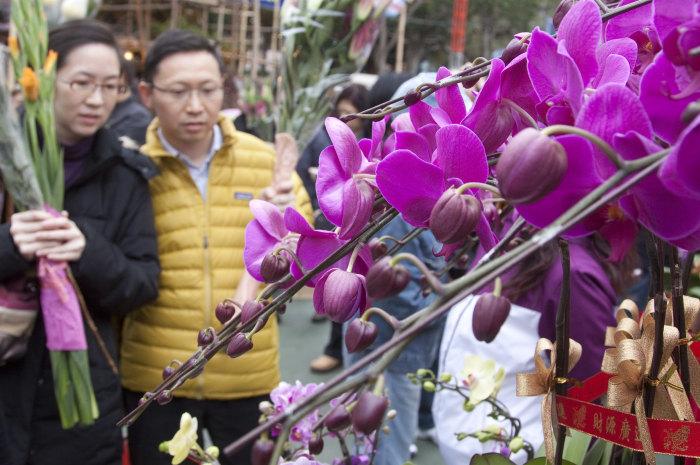 Hong Kong Flower Market orchid