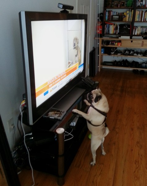 TODAY producer Feliciano Garcia's dog Raisin was a big fan of this morning's 'Dog TV' segment.