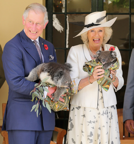 ADELAIDE, AUSTRALIA - NOVEMBER 07:  Prince Charles, Prince of Wales holds a koala called Kao whilst Camilla, Duchess of Cornwall holds a koala called ...