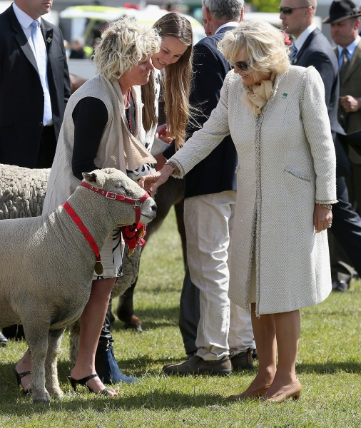 Image: Camilla greets a sheep during a visit to Christchurch, New Zealand on Nov. 16, 2012.