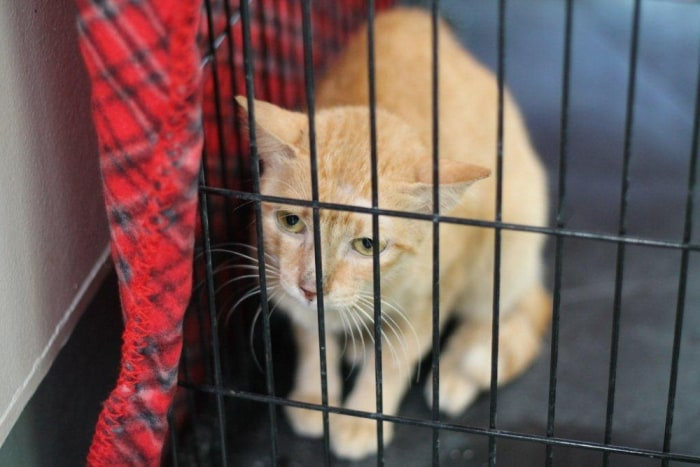 Image: This 4-year-old cat stowed away in a container ship headed from Manila, Philippines, to Los Angeles.
