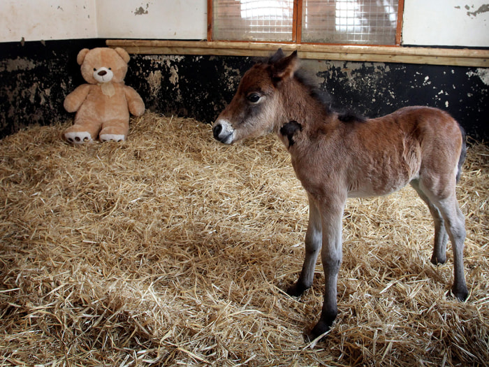 Image: Breeze the foal and Button the teddy bear