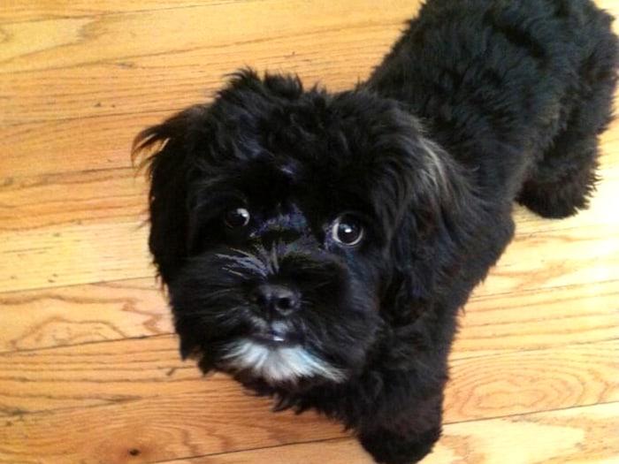 Hoda's dog Blake, earlier this year.