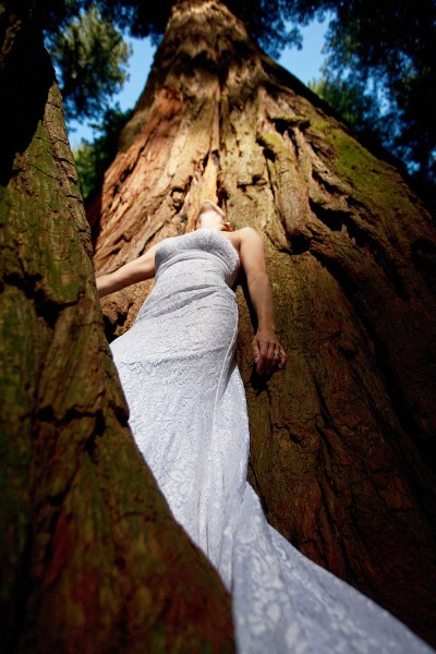 The dress in the Redwood Forest.