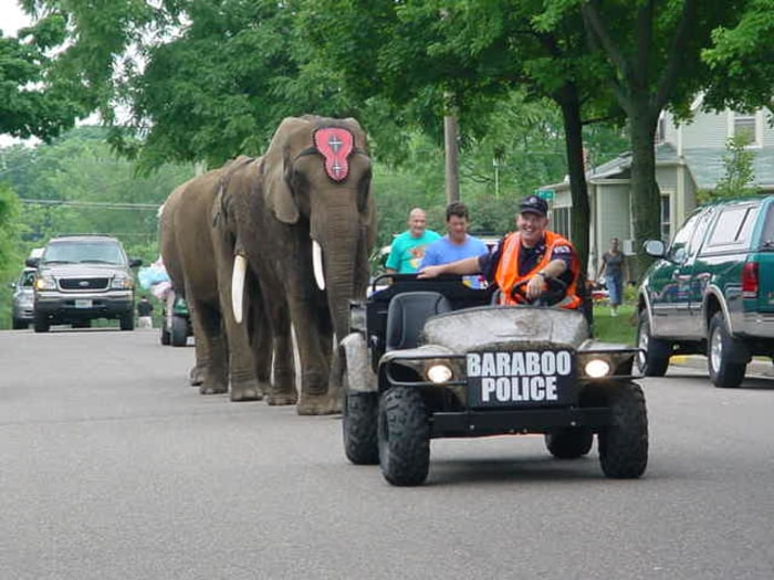 Elephant walks down street in parade