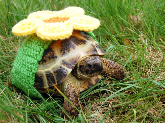 PIC FROM KATIE BRADLEY / CATERS NEWS - (PICTURED: Decorative knitted cosy) - Now thats what you call a shell suit! These are the hilarious knitted cos...