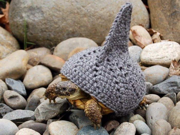 PIC FROM KATIE BRADLEY / CATERS NEWS - (PICTURED: Knitted shark cosy) - Now thats what you call a shell suit! These are the hilarious knitted cosies -...