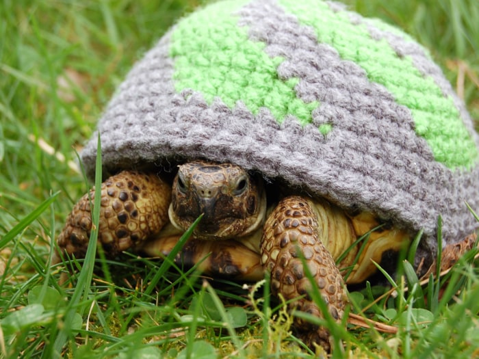 PIC FROM KATIE BRADLEY / CATERS NEWS - (PICTURED: Patterned cosy) - Now thats what you call a shell suit! These are the hilarious knitted cosies - des...