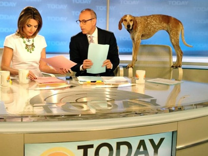 Maddie the coonhound visited the set of TODAY on Monday after having traveled to all 50 states to show off her balancing skills. Here she takes a look over Matt's shoulder as he and Savannah prepare for the broadcast.