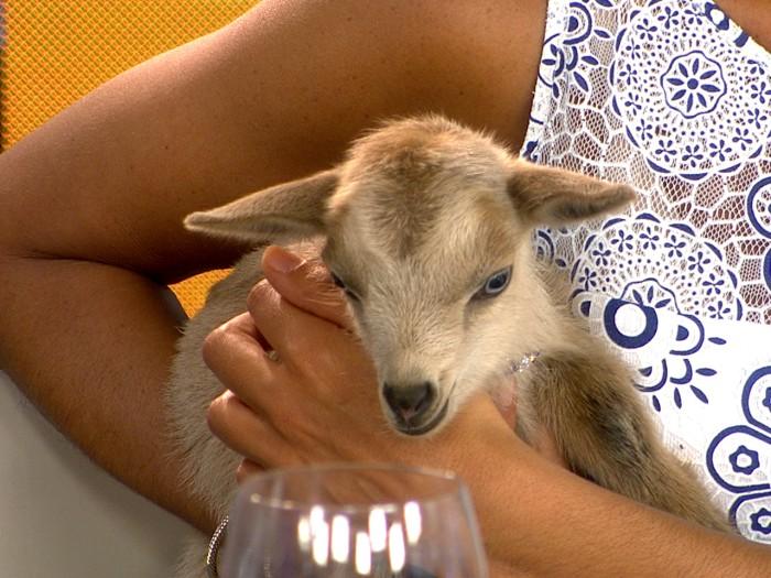 The goat named Hoda.