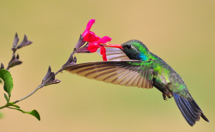 Image: Picture of a hummingbird taken on March 27 with a Nikon D90 + zoom 80-400 mm - 400 mm - ISO 800 - 1/3200 sec - f 7.1.