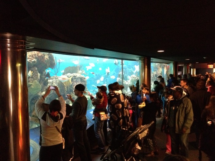 Image: Visitors snap photos of the partially reopened New York Aquarium.