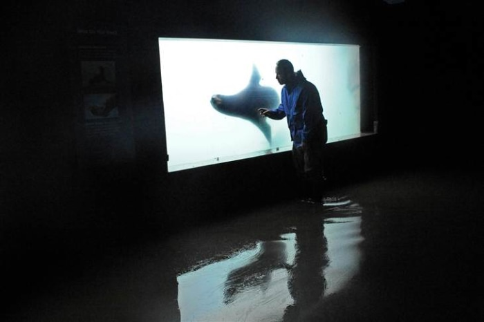 Image: Jon Forrest Dohlin at the New York Aquarium