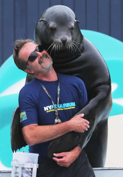 Image: Senior trainer Guenter Skammel gets a hug from sea lion Duke during a press preview before the re-opening of the Wildlife Cons...