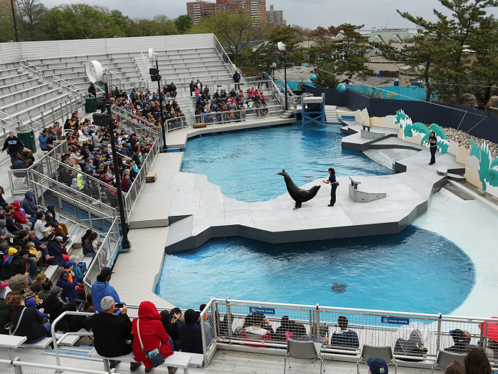 Image: A sea lion performs on the first day of the re-opening to the public of the Wildlife Conservation Society New York Aquarium in ...