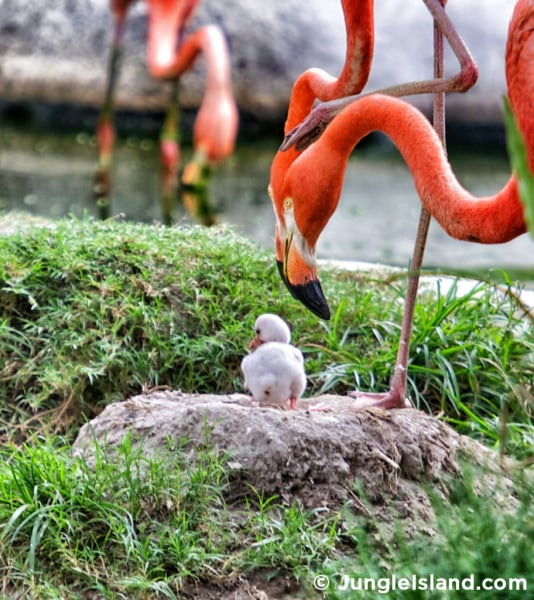 Help Give This Newly Hatched Baby Flamingo A Name Today Com