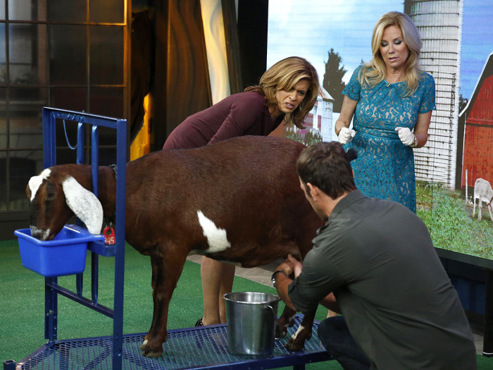Hoda and Kathie tried their hands at milking a goat on Friday.