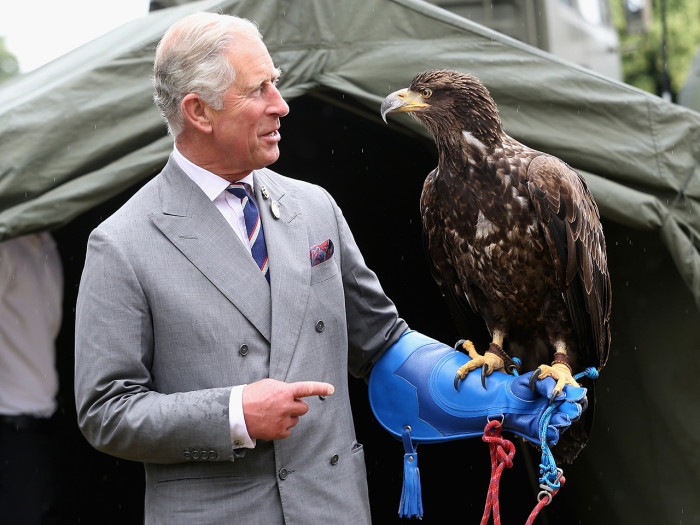 KING'S LYNN, ENGLAND - JULY 31:  Prince Charles, Prince of Wales holds a bald eagle called Zephyr during a visit to the 132nd Sandringham Flower Show ...