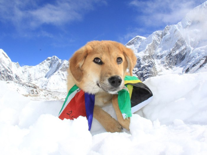 Image: Rupee the dog on Mount Everest
