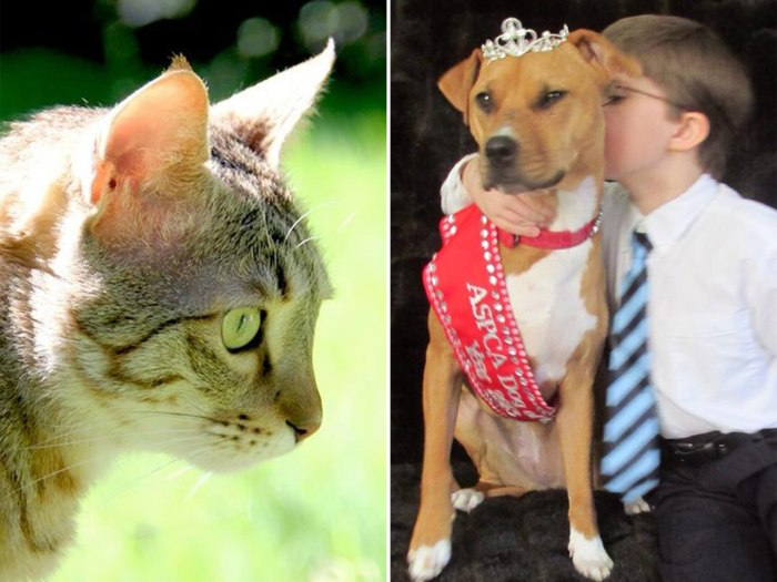 Image: The ASPCA's Cat of the Year and Dog of the Year for 2013