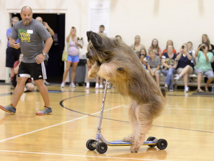 'Norman the Scooter Dog' accomplished his Guinness World Record feat at a charity event in Marietta, Ga., in July.