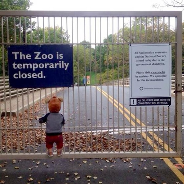 Boy grips gate outside of zoo