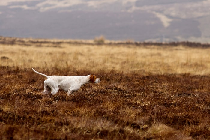 DPOTY 2013 Dogs At Work Winner: Susan Stone Amport