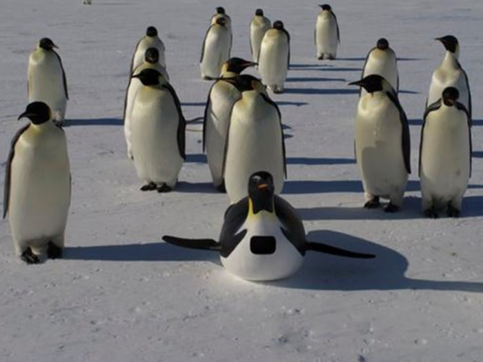 IMAGE: Penguins