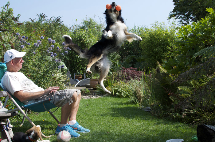 DPOTY 2013 Dogs At Play Winner: Richard Shore The Kennel Club