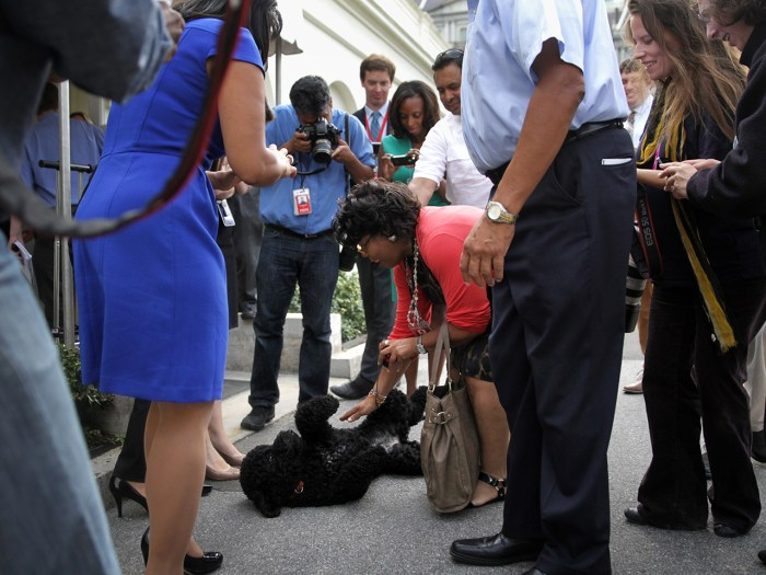 WASHINGTON, DC - SEPTEMBER 09:  Presidential dog Sunny is pet by April D. Ryan of American Urban Radio Networks as other members of the White House Pr...