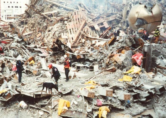 "Image: ""Hero Dogs of 9/11"""