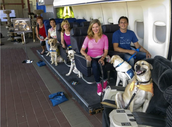 A Hollywood Studio Where Dogs Learn To Fly Today Com