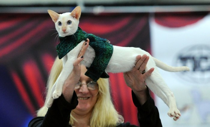 "NEW YORK, NY - SEPTEMBER 28:  A general view of Haute Kitty CATure Feline & Canine Fashion Show at Day 1 of AKC ""Meet The Breeds"" showcase at Jacob Ja..."
