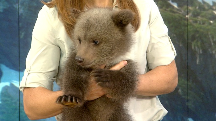 Bring your bear cub to work day.